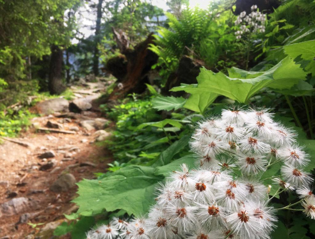 Nature sauvage sur le chemin du Montenvers, Virée Verticale