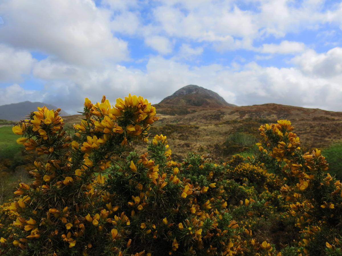 Le Diamond Hill trône en plein cœur du Parc National du Connemara, Virée Verticale