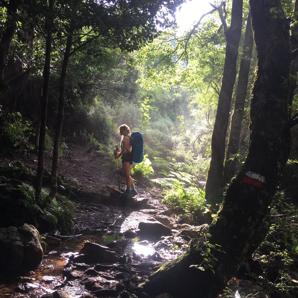 Dans la forêt enchantée, Virée Verticale